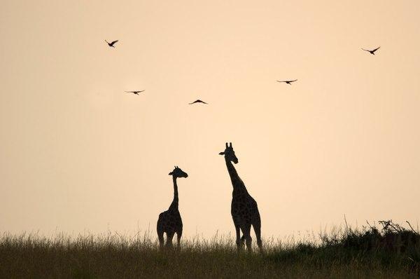 Национальный парк Кабарега, Уганда.