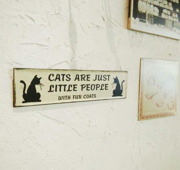 Забавные таблички Сингапур, Кафе, Кот, Табличка, Интересные правила