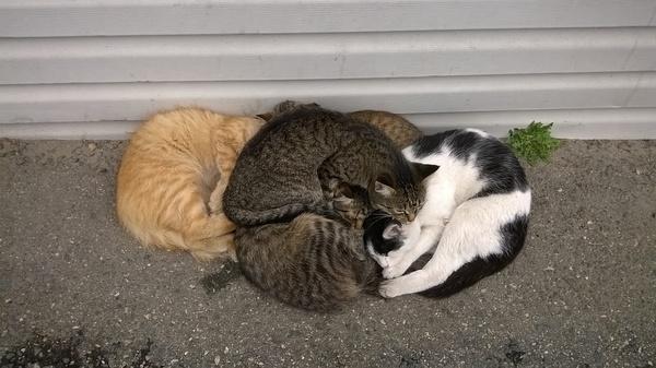Холода не страшны! Кот, Спит, Сон, Коты захватят мир, Холод, Ульяновск