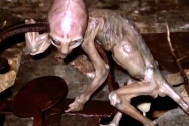Сказ о том, как  Анхель Нуньес поймал инопланетянина. Инопланетяне, Фото, Юмор, Уфология, Длиннопост
