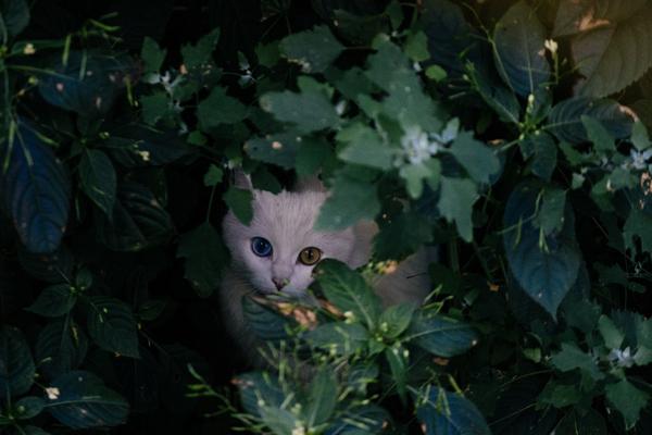 Милейший дворовый котейка