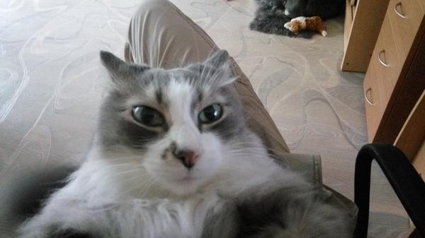 Кот моей подруги.