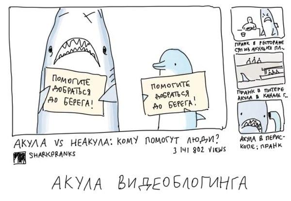 Такие разные акулы Duran, Акула, Длиннопост