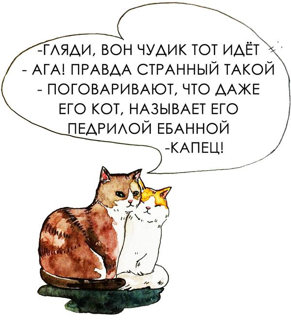 Когда ты хозяин кота П.Е.