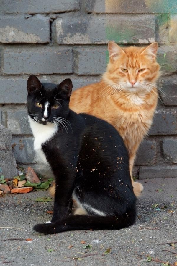 Рыжие предпочитают брюнеток! Немного кронштадских котиков, которых я беспардонно разбудил =) Кот, Милота, Кронштадт, Санкт-Петербург, Сон, Фото, Длиннопост