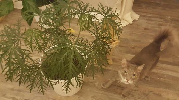 Помогите опознать растение... Растения, Помощь, Занзибар