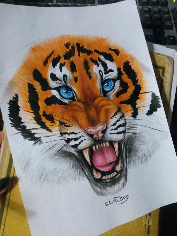 Потихоньку учусь рисовать Портрет, Тигр, Цветные карандаши, Кот
