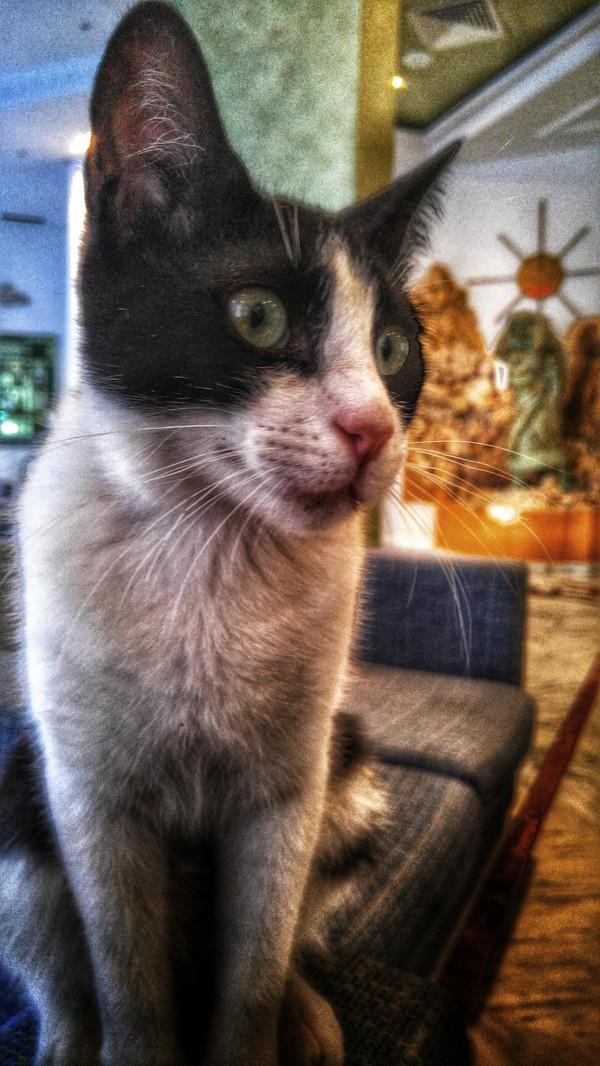 Обработал тут фото кота, мне кажется это неплохие обои на телефон