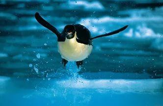 Стишок про пингвина. Стихи, Пингвины, Горький