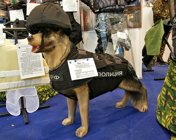 Собака мвд с бронежилетом