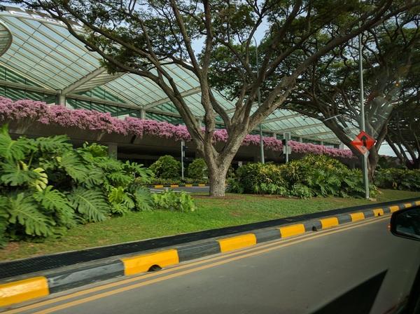 Сингапур – город-рай Сингапур, Путешествия, Азия, Singapore, Merlion, Не азия, Длиннопост