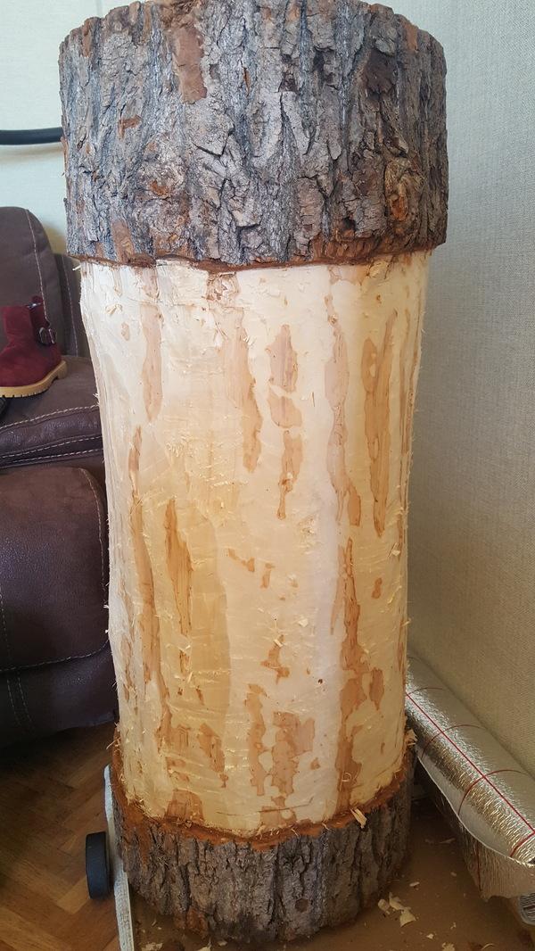 Природа всех сильнее. Дерево, Древесный гриб, Природа, Длиннопост