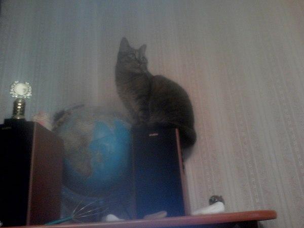 Кошка явно собралась в отпуск