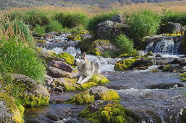 Отчет как мы сходили на малдыйз, дошли до горного водоема и потеряли собаку Инта, Горы, Хаски, Малдыйз, Собака, Отчет, Путешествия, Коми, Длиннопост
