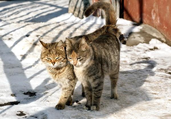 Котячие тёрки