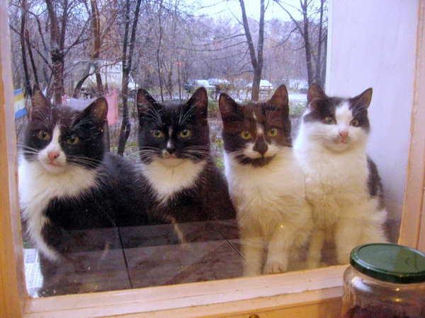 Банды Сургута Кот, Банда, Рыжие, Черно-Белое фото, Сургут
