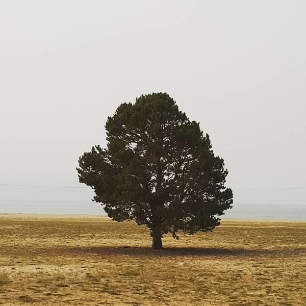 Просто дерево на острове Ольхон, Байкал