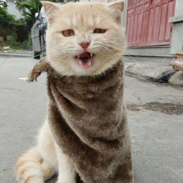 Отругала кота