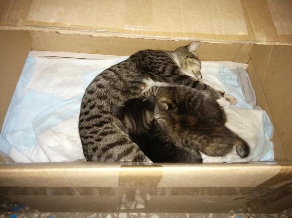Шведский стол для кошачьего семейства ^_^ (Новокуйбышевск) Кот, Семья, Еда