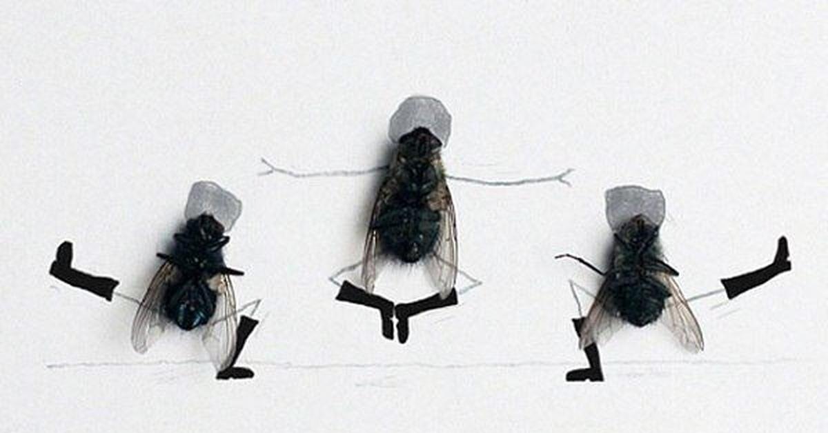 Прикольные картинки муха