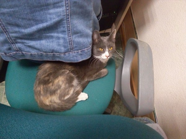 Кошка из библиотечной вентиляции(Томск) Кот, Найденыш, Ищу хозяина, Томск