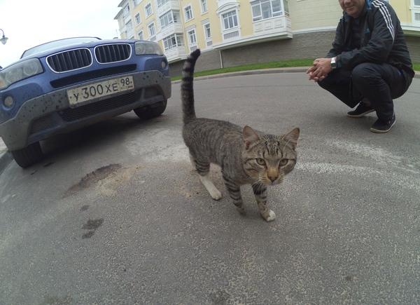 https://cs8.pikabu.ru/post_img/2016/09/02/5/1472796473187610697.jpg