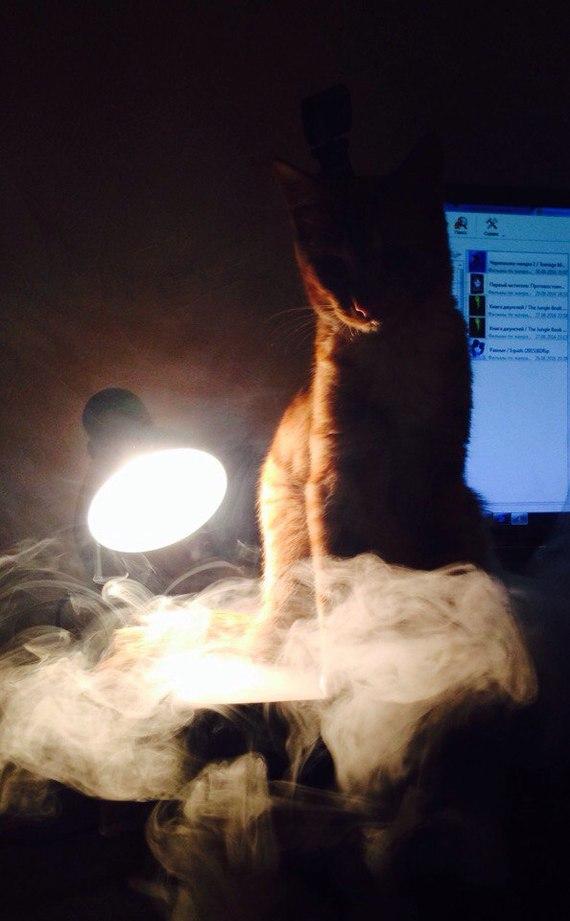 Мистический кот с лампой