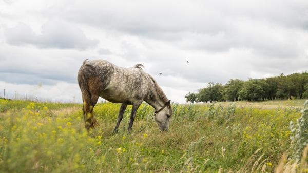 На лугу фото, пейзаж, лошадь, луг, деревня