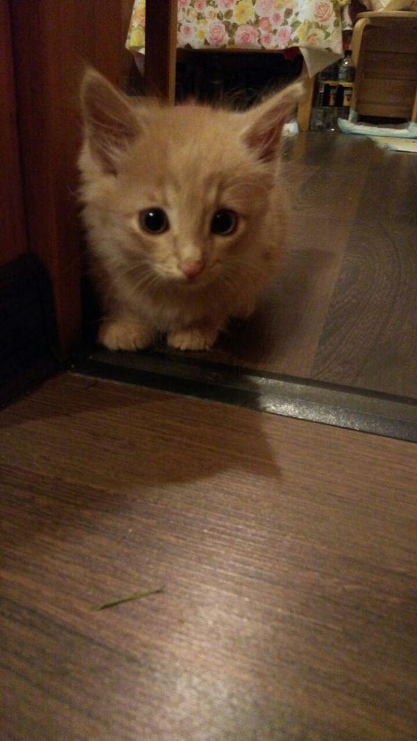 Москва! Давайте найдем дом котенку. Кот ищет дом, В добрые руки, Кот, Дом, Москва, Помощь, Сила пикабу, Кот в добрые руки, Длиннопост