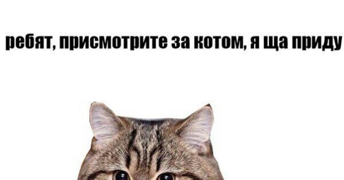 Присмотрите за моим котом