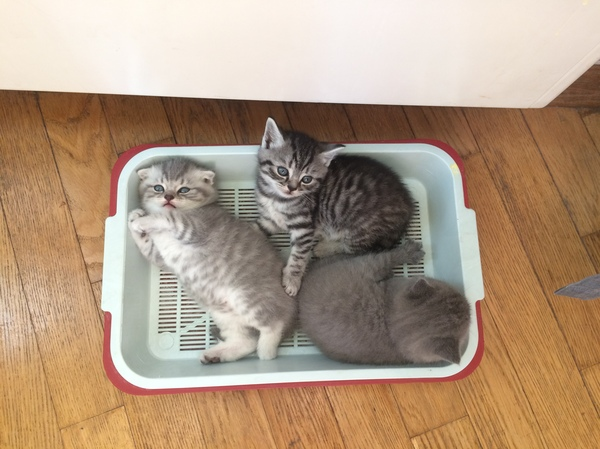 Как коту поменять лоток