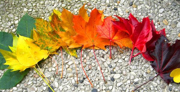 Цвета осени Осень, Природа, Фото, Листья, Гамма