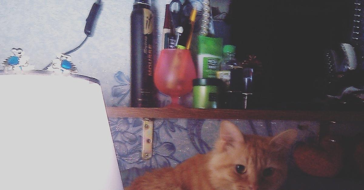 Кот лампа гифка, для
