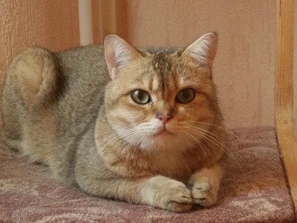 В тему котиков. Коты vs мужчины, Невозмутимость, Длиннопост, Кот