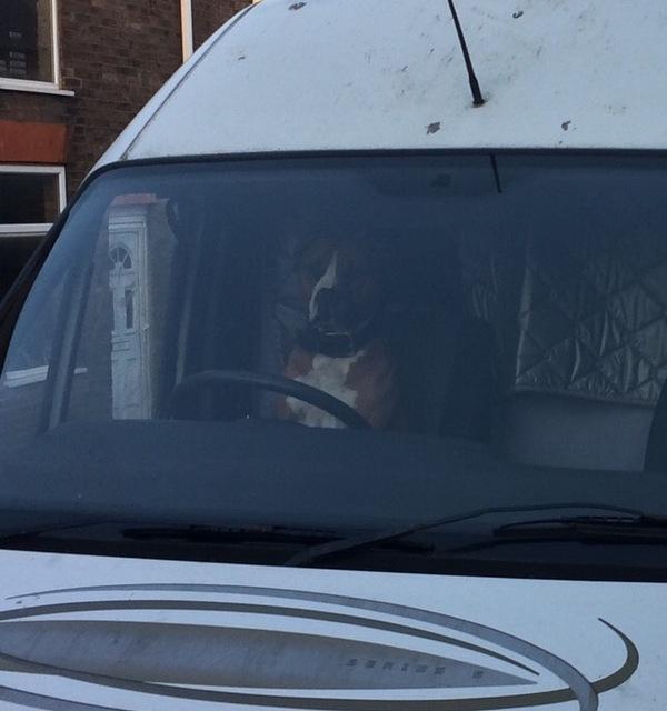 Осторожно, злая собака за рулём! Фото, Собака, За рулем, IPhone 5s