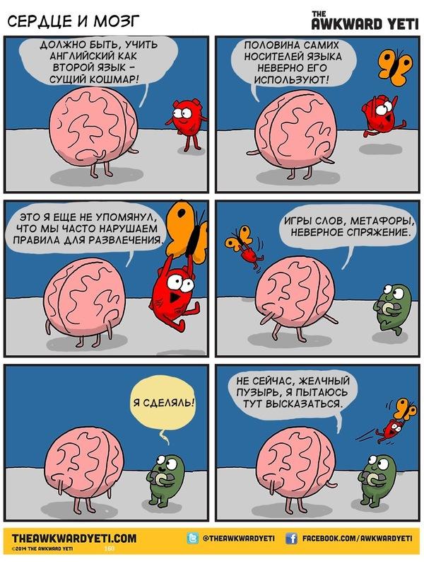 Сердце и мозг