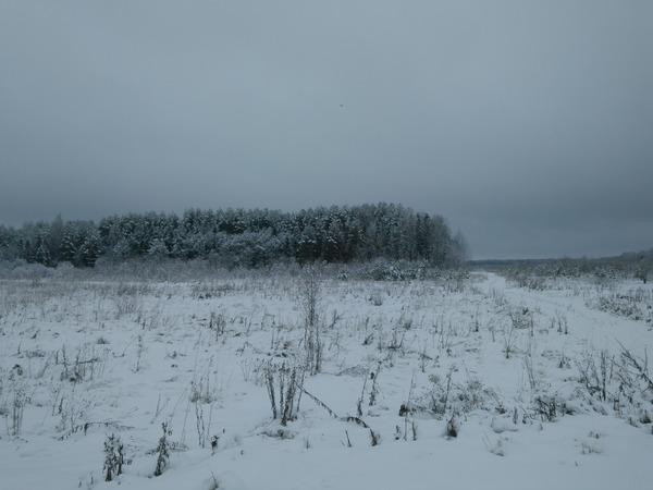 Времена года. Поле, Лес, Времена года, Осень, Зима, Весна