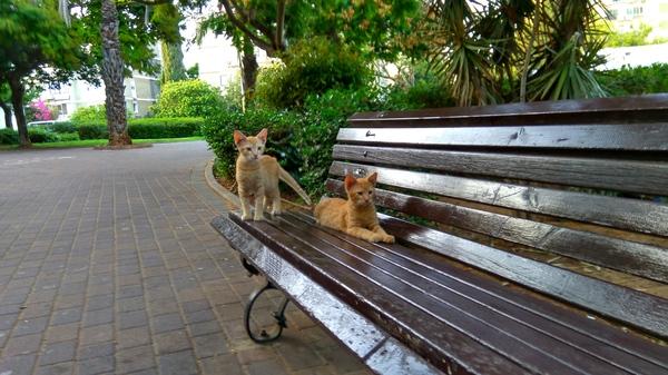 Братаны-котаны на лавке Кот, Скамейки, Парк, Братья, Рыжие