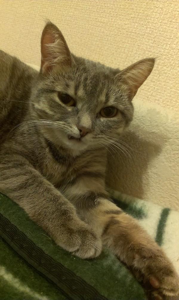 Кошка иногда так сидит, наверное, она что-то промышляет против нас Киски, Кот, Моё, Длиннопост