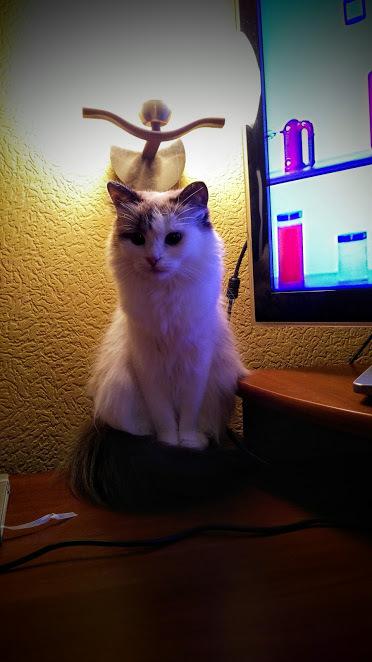 Ламповая кошка
