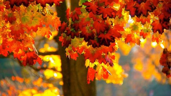 Оранжевое настроение Осень, Оранжевый, Осеннее, Украшение, Бусы, Колье