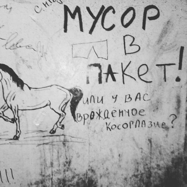 Объявление Конюшня, Санкт-Петербург, Объявление