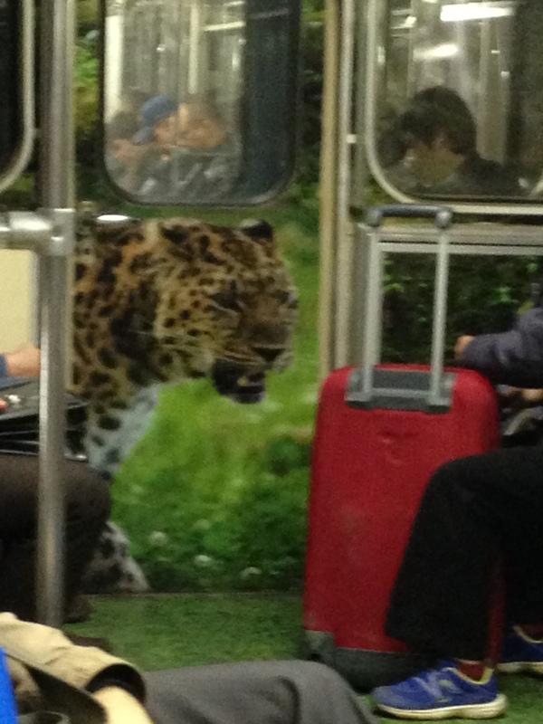 Вагон метро Московское метро, Животные, Глаза отдыхают, Фотография, Во всех бы так, Облака, Трава, Длиннопост