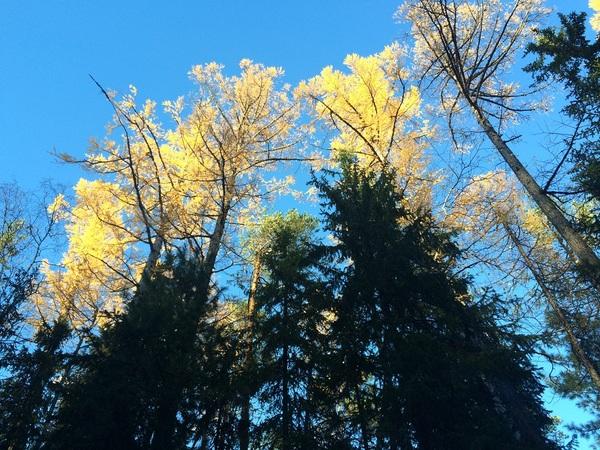Осень Тайга, Север, Красота