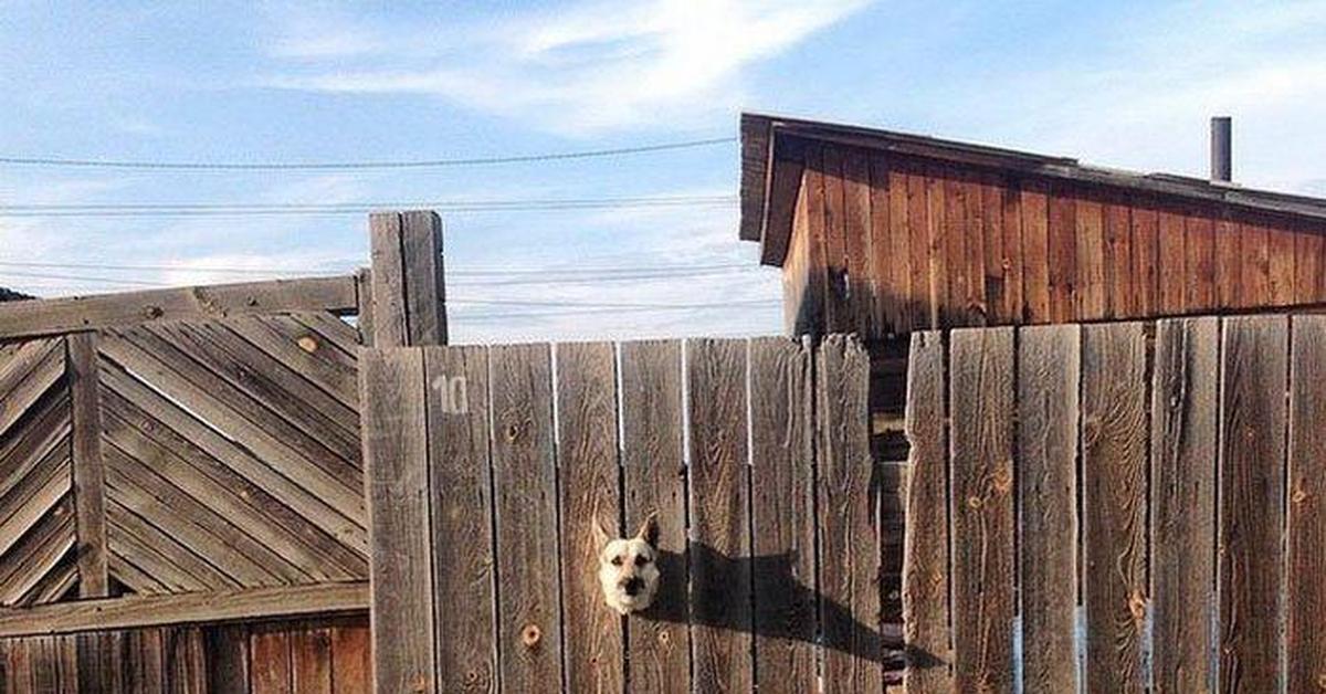Смешные картинки про забор, днем рождения подруге