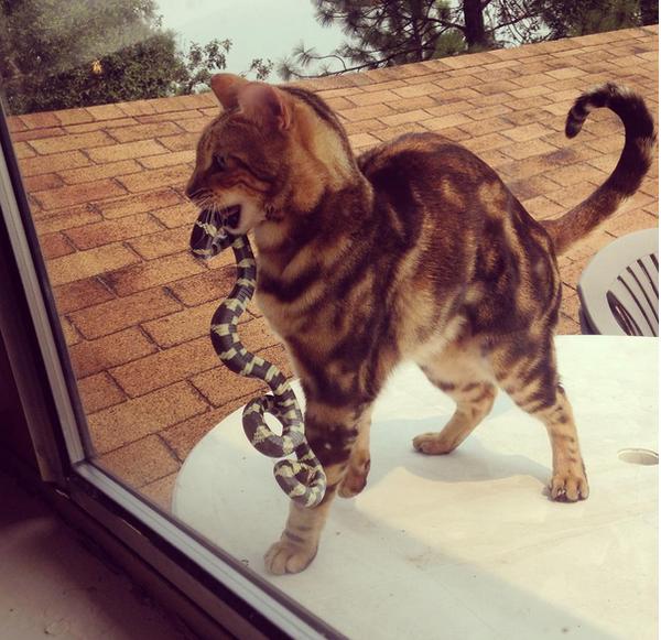 """""""Извини, но ты останешься снаружи"""""""