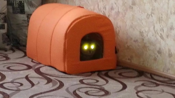 Купил новый дом кошке Кот, Новый домик, Страх, Подсветка, Ты, Видео, Картинки