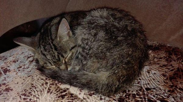 Нужна помощь! Новосибирск! Помогите пристроить кошку! В добрые руки, Помощь, Кот, Новосибирск