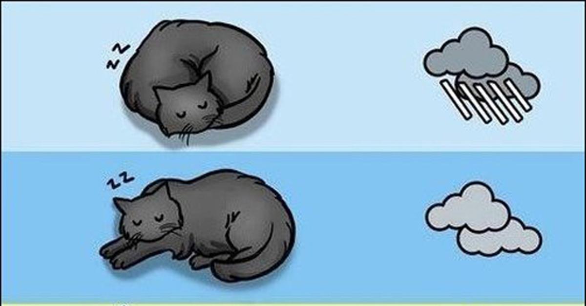 Узнать погоду по коту картинки