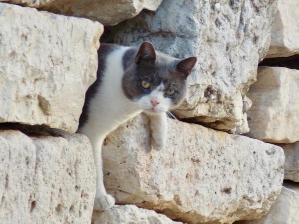 Афинский котик на развалинах Акрополя.